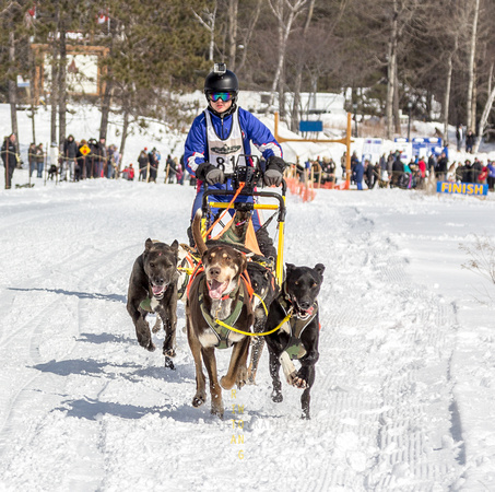 Haliburton Dog Sled Race Musher