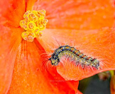 Caterpillar Display