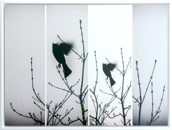 Freedom (framed)
