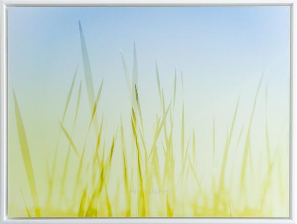 Summer Grasses (framed)