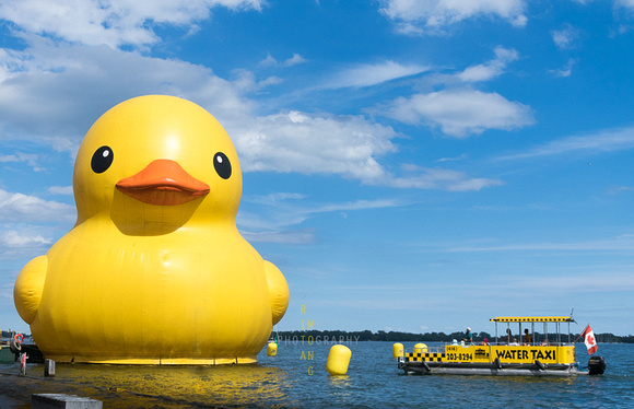 Rubber Duck Docks in Lake Ontario