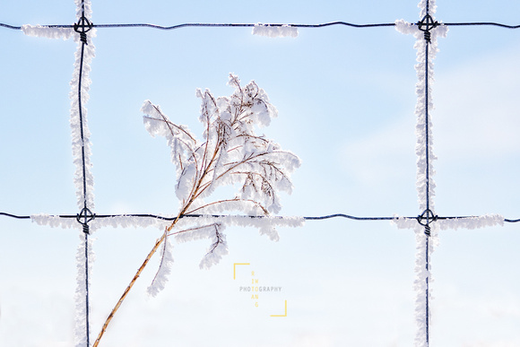 Sunny Frost