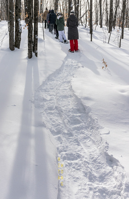 Snowshoeing at Mont Tremblant-2