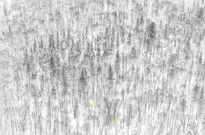 Winter Forest Sketch